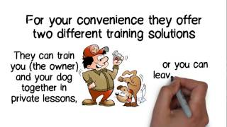 Looking For The Right Dog Trainer In San Antonio, Tx?  - Lara's Canine Solutions - Dog Training