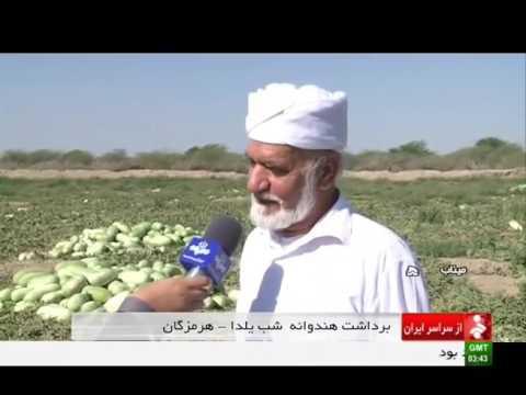 Iran Watermelon harvest, Minab county برداشت هندوانه شهرستان ميناب ايران