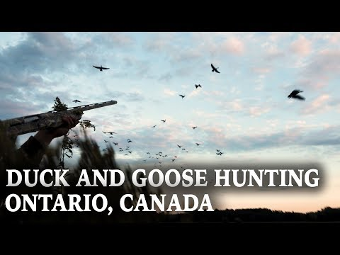Hunting Ducks And Geese In Ontario