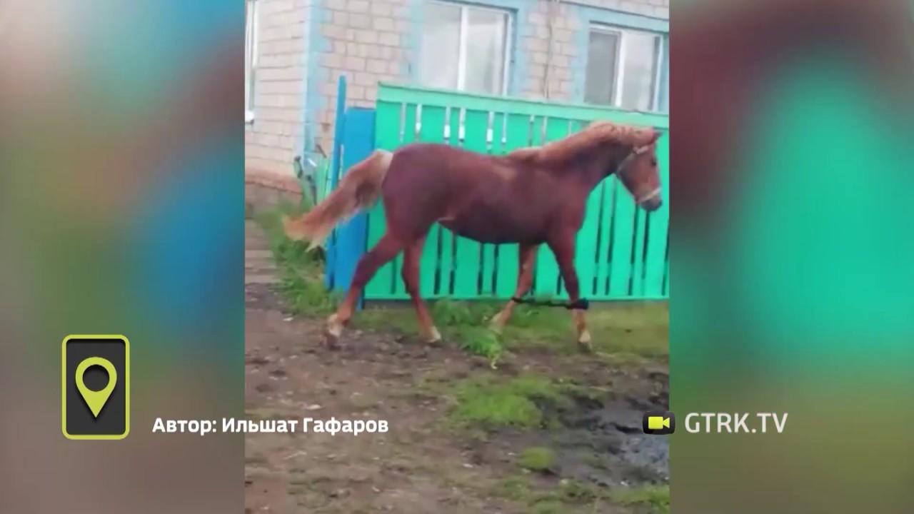 Нечеловеческая преданность: в Башкирии лошадь услышала зов хозяина за несколько километров (ВИДЕО)