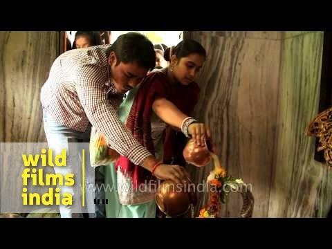 Phallic worship: Hindu devotees pour milk over Shiv