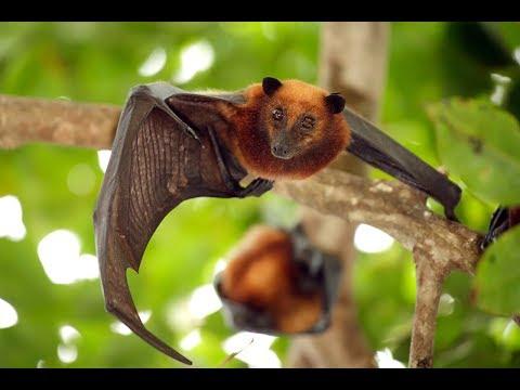 Top 5 Surprising Facts About Bats