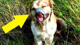Hund gefesselt und am Straßenrand zum Sterben zurückgelassen!