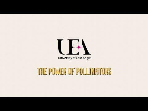 Protecting Our Pollinators | University of East Anglia (UEA)