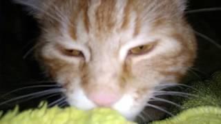 Прикол с котом🔴 Кот