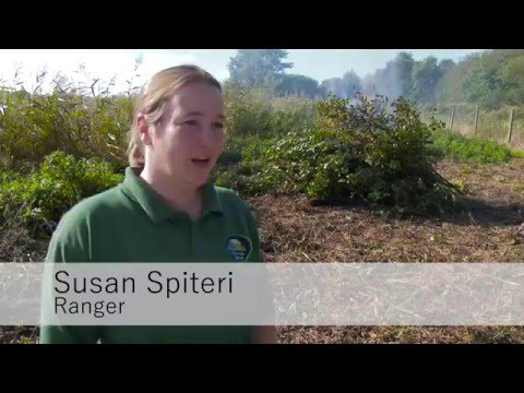 A Typical Day as a Ranger at Titchfield Haven National Nature Reserve