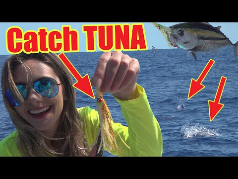 How To Catch FLORIDA TUNA! Catch And Cook
