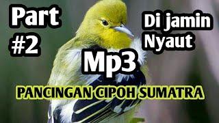 Gambar cover Pancingan cipoh SUMATRA sirtu Mp3 cipeuw cipow sirdung