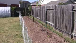Blackberry Trellis