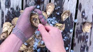 Oysters XO How to Shuck an Oyster (5 Steps Explained)