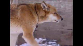 Ярославцы за неделю собрали полтонны корма собакам из приюта