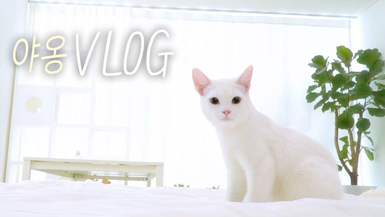고양이의 하루 | 고양이산책