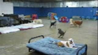 Paws Here Dog Daycare Boarding And Training Facility