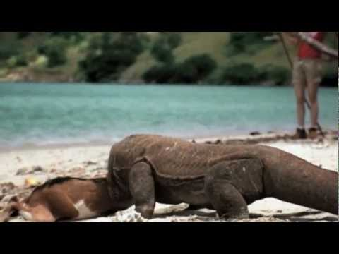 Komodo Island Movie Komodo Island