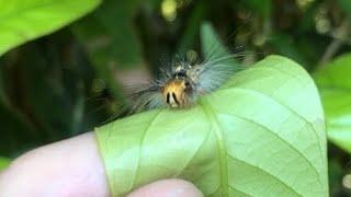 ニャッキのような虫を握ってみました。