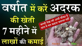 वर्षात में करें अदरक की खेती 7 महीने में होगी लाखों की कमाई | Ginger Cultivation | Kheti  | Ginger