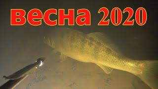 Все темные дела делаются ночью Подводная охота весна 2020