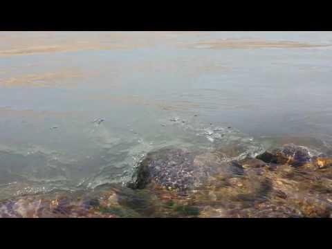 سو جھنڈا دریا سندھ