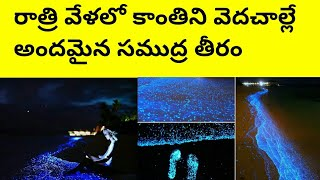 రాత్రి వేళలో కాంతిని వెదజల్లే సముద్ర అలలు#best telugu tourism places# world best places# maldev vadu