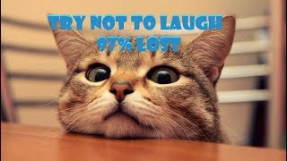 FUNNY AND CUTE CATS - CATS COMPILATION 2018 - CATS VINES - TRY NOT TO LAUGH