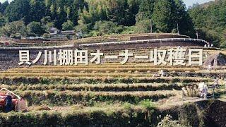 貝ノ川棚田オーナー収穫日