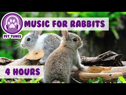 4 Hours of Relaxing Music for Rabbits - Calm Down Your Bunny with Soothing Pet Music!
