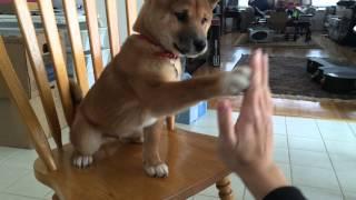 Kibo, high five