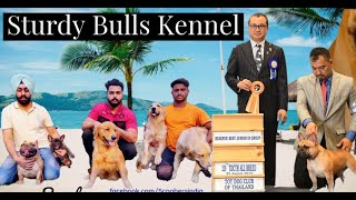 सब Breeder टांग खिंचाई करते हैं | Sturdy Bulls Kennel | French Bulldog,Golden Retriever | Scoobers