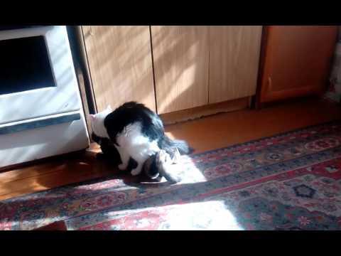 Кошка с кошкой! Две самки
