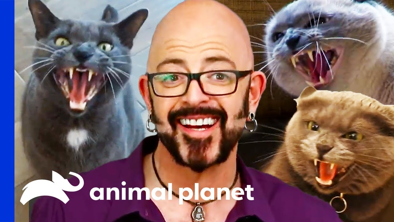How Long Can Jackson Galaxy Stay In The Ring With This Very Angry Kitty Youtube