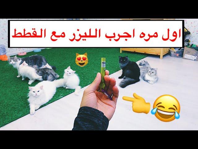 ردة فعل القطط على الليزر 😻 اول مره يشوفونه في حياتهم 😂💔 / Mohamed Vlog