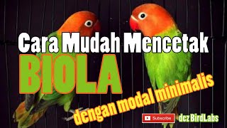 Video CARA MENCETAK LOVEBIRD BIOLA DENGAN MODAL MINIMALIS #TipsBreeding download MP3, 3GP, MP4, WEBM, AVI, FLV Juli 2018
