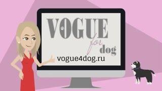 Анимационное видео Интернет магазин для собак | Ролики на заказ rolikanimate.ru