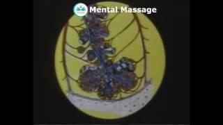 Органы дыхания, дыхательная система организма человека  Процесс дыхания 1