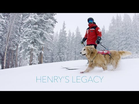 Henry's Legacy | Vail Avalanche Rescue Dog