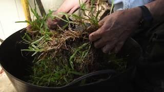 Buffalo Lawn Repair -Burke's Backyard, How To
