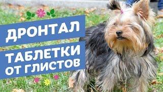 Таблетки от глистов Дронтал для кошек и собак / Drontal средство от гельминтов для котов и собак