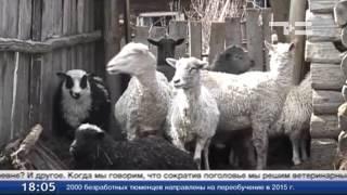 Тюменские депутаты - против сокращения поголовья животных в ЛПХ