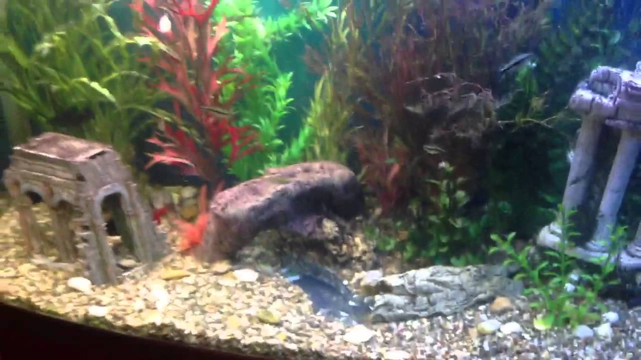 Fish tank underwater river youtube for Fish tank youtube