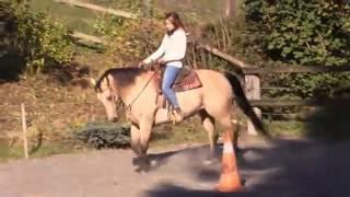 NP Ladys Peppy Lena - Jument Quarter Horse à vendre
