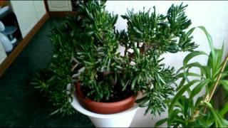 Растения для фитофильтра. Обзор.