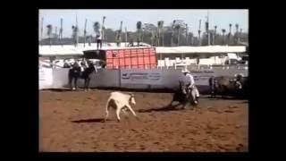 видео Рейнинг – ковбойская выездка