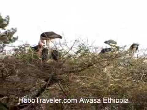 Large Birds in Awasa Ethiopia