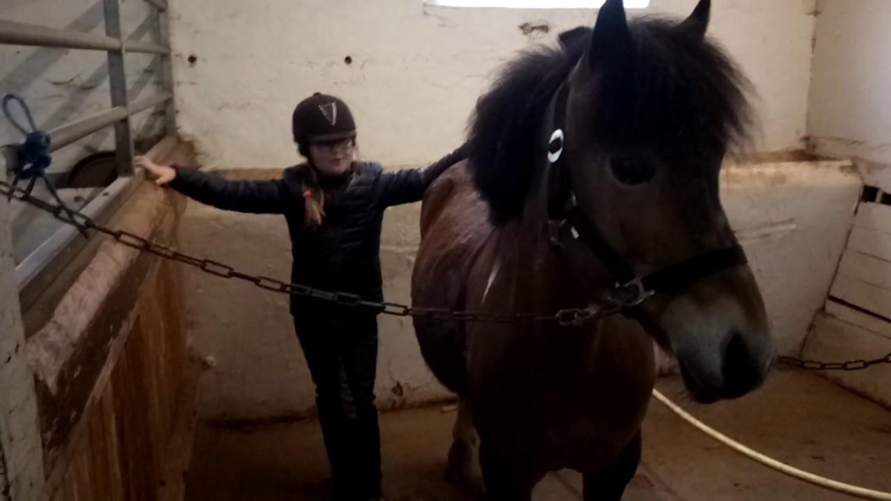 Hestepiger társkereső