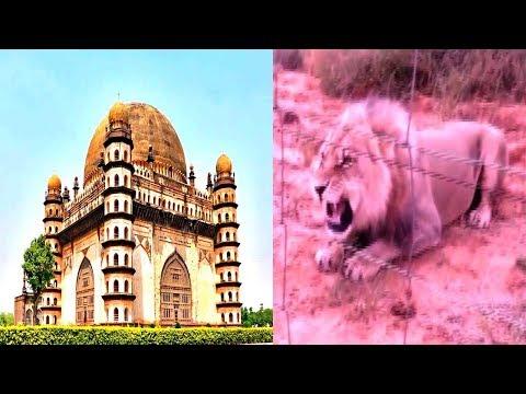 Sher Aaya.. Sher Aaya.. Bijapur Me Viral..! Bijapur news 13-07-2018