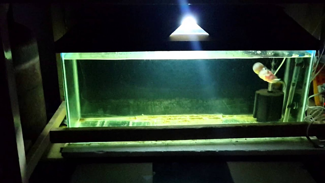BEST CICHLID TANK AND FLOWERHORN - YouTube