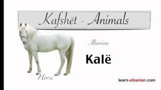 Animals Vocabulary / Learn Albanian and Pronunciation