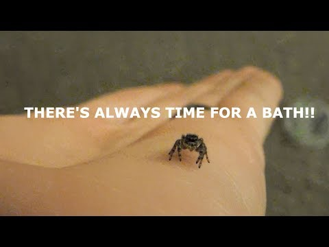 A BIG MOLT! AND SPIDER BATH TIME! [] Phid Vlog 3