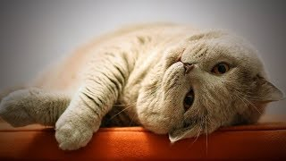 Funny Cats Not In Mood 🤭🐱 Cute Cats Without Mood (Full) [Funny Pets]