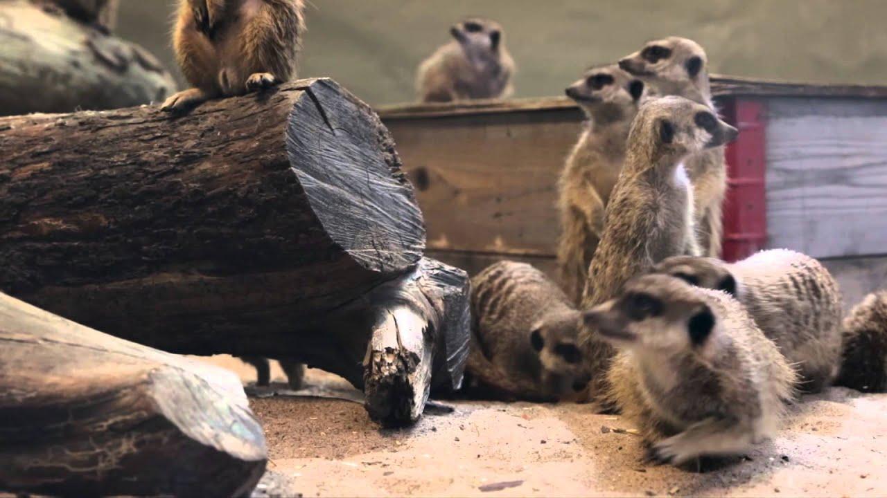 Djuraktiviteter på Parken Zoo Reklamfilm 2015 - YouTube 8adf9d359a63a